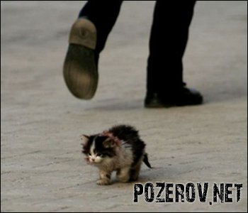 От жестокости к животным страдают люди
